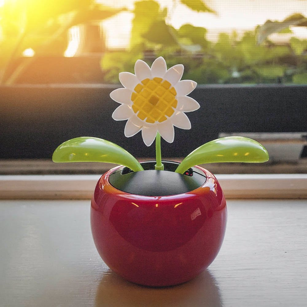 Ozsale touch of eco rock bloom solar dancing daisy preview with zoom touch of eco rock bloom solar dancing daisy izmirmasajfo